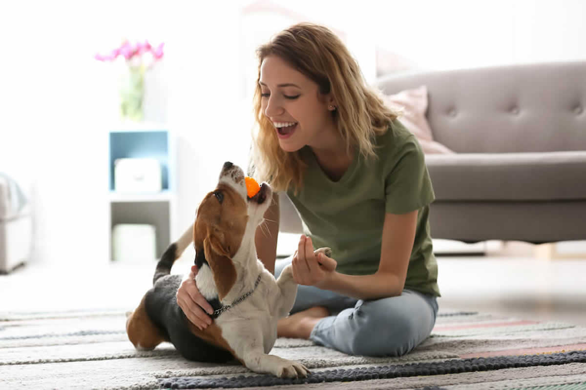 Four Tips to Find the Best Apartment for You to Share with Your Dog