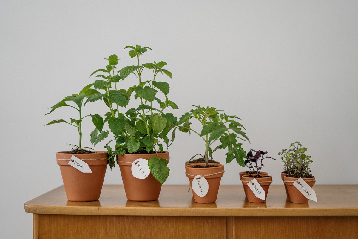 Five Tips to Keeping Plants Alive in Your Apartment